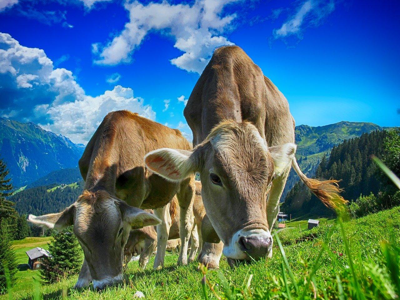 Skuteczne magazynowanie płodów rolnych